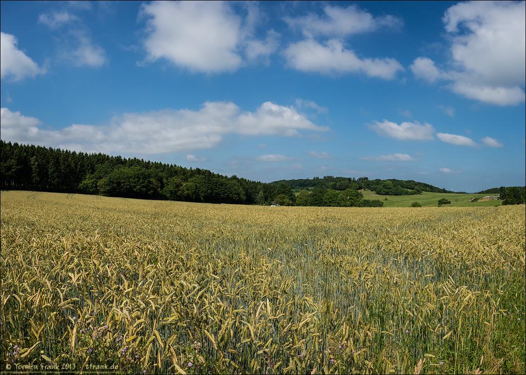 Ein Kornfeld nahe Waldbauer.