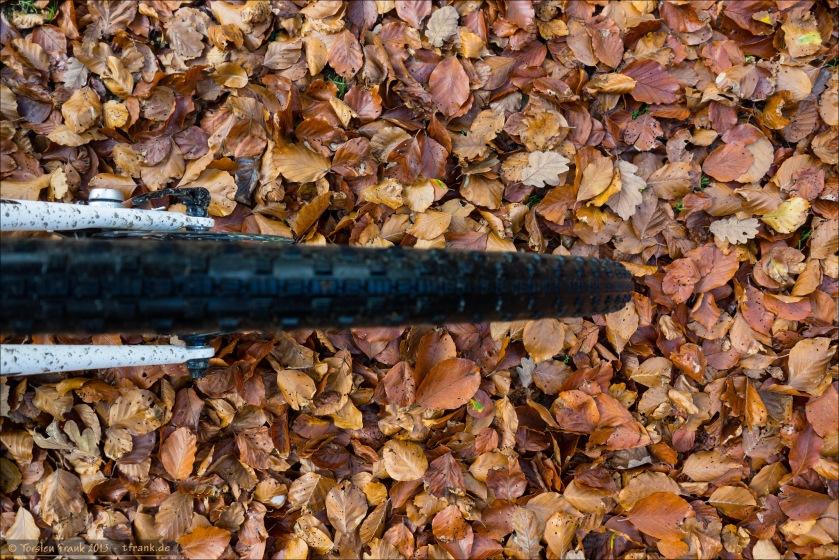 Ein dichter Teppich auf Buchen- und Eichenlaub.