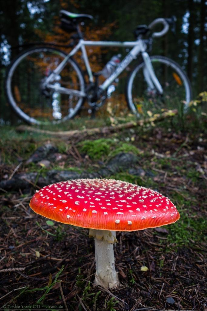Pilze suchen per Rad ;-)