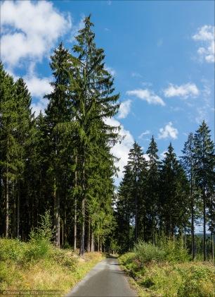 Der kleine Weg aus dem Schwarzbachtal hoch zur Heinsberger Hochheide. Die Asphaltqualität, die hier sichtbar ist, täuscht über die wahren (nicht vorhandenen) Qualitäten des Weges hinweg. Der ist schon ziemlich in Brocken, große Löcher im Asphalt, irgendwie immer viele Borkenreste und andere Holzrück-Rückstände auf dem Weg.