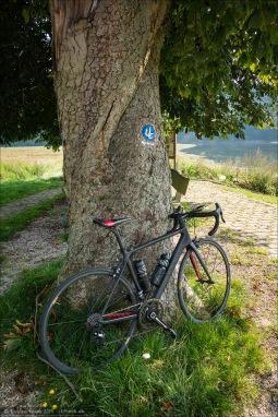 Ein Rad am Baum.