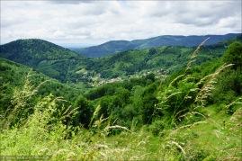 Ausblick durch's Gras hinweg.