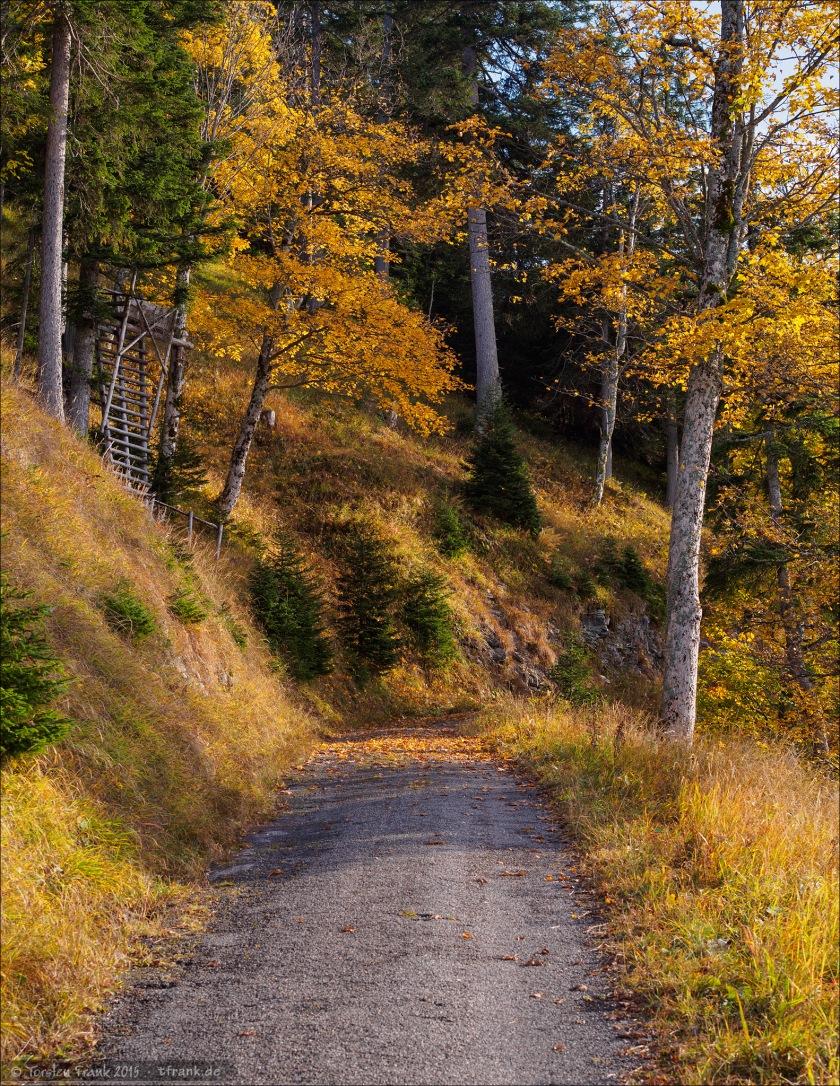 So unterschiedlich kann der Aufstieg zum Älpele sein. Eine kleine Forststraße wie hier. Oder ein steiler, schmaler Bergpfad, wie auf der anderen Seite des Pechkopfes...