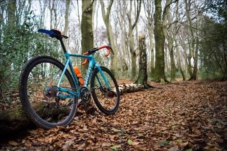 Crossrad auf einem Meer aus Blättern und unter kahlen Bäumen... Und das im Dezember bei zweistelligen Temperaturen...