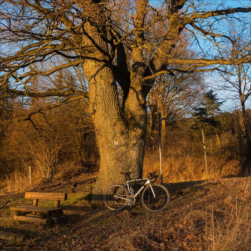 11322_0618-bike-baum_2048