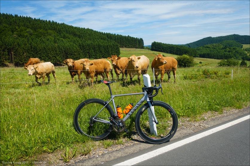 Rennrad und Fans. ;-)
