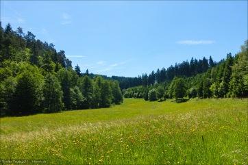 Kleine Wiesentäler im Wittgensteiner Wald - das Ilsetal.