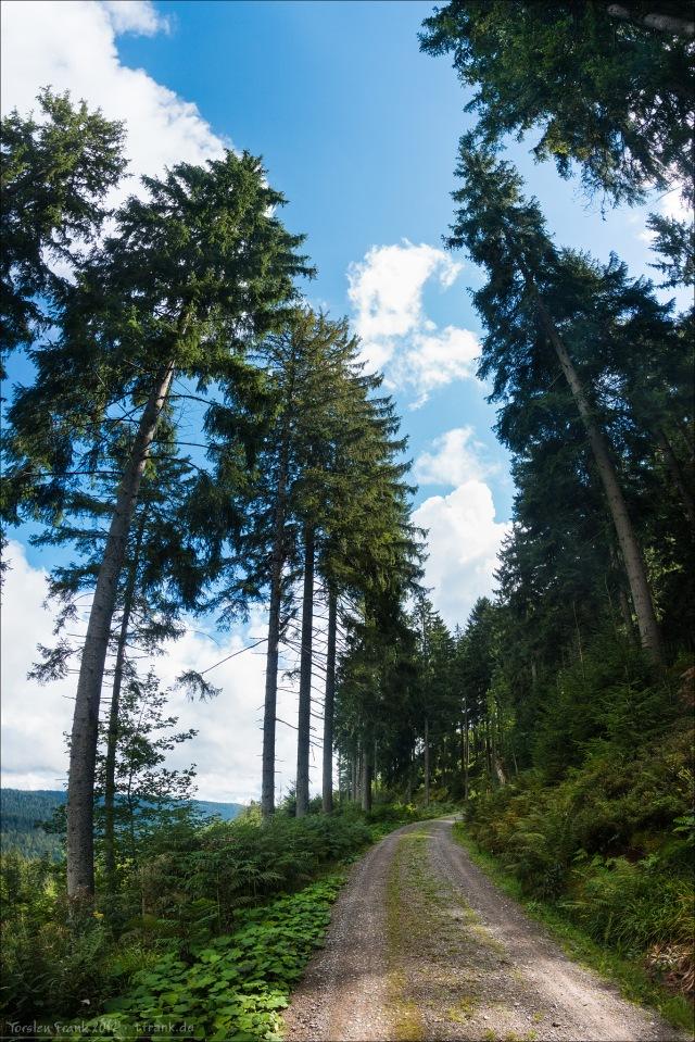 Bäume, die an Wegen stehen.